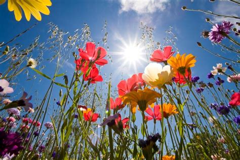 nomi di fiori in francese quante storie nei nomi dei fiori gsa master news