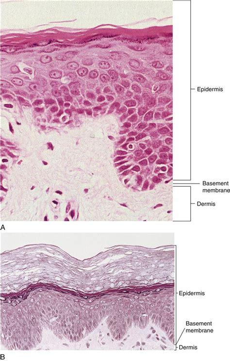 tissue sectioning methods 8 basic tissue pocket dentistry