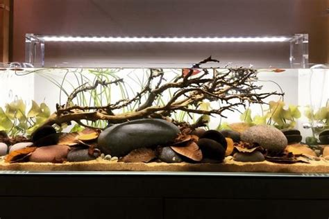 aquarium design group hardscape the art and science of quot functional aquascaping quot tannin