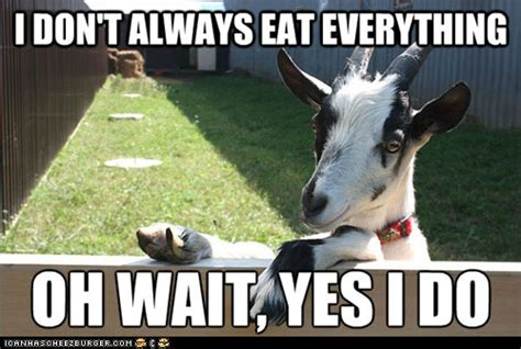 Goat Meme - screaming goat memes image memes at relatably com