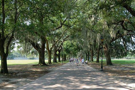 shade trees for backyard best shade trees choosing the best shade trees for your yard