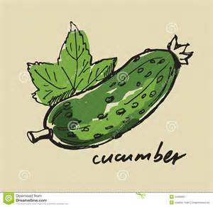 Kitchen Design Drawings Hand Drawn Cucumber Royalty Free Stock Photography Image