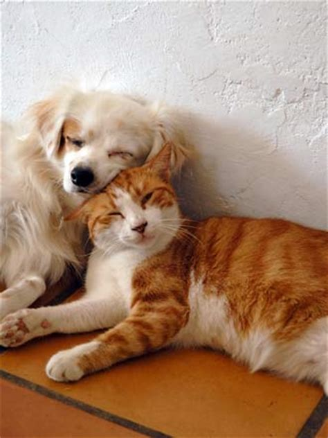 puppy and kitten cuddling don t be fooled by these 12 common pet myths pawnation