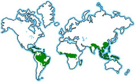 Plants Of Tropical Rainforest Biome - the rainforest michael07 s weblog