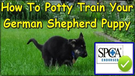 how to potty a german shepherd how to potty my german shepherd puppy start today german shepherd potty