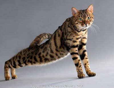 with cats 31 stretches inspired by cats books 33 best images about cats a on cats