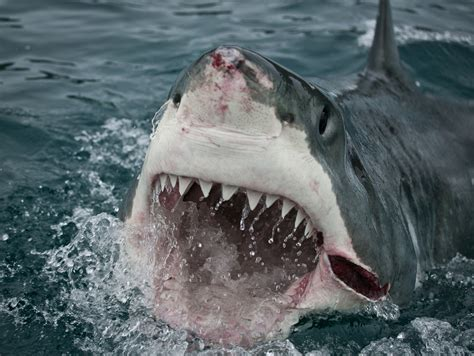jaws biography channel documentary finally a proven way to keep great white sharks at arm s