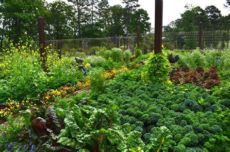 edible gardens beautiful edible gardens garden delights