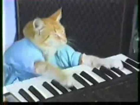 cat playing piano youtube