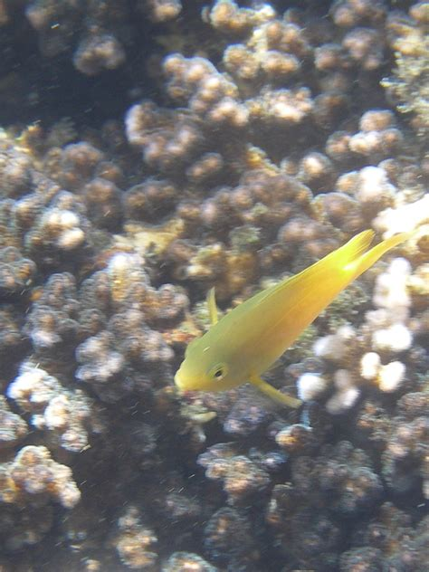 Swimming Fish L by Yellow Fish Swimming By