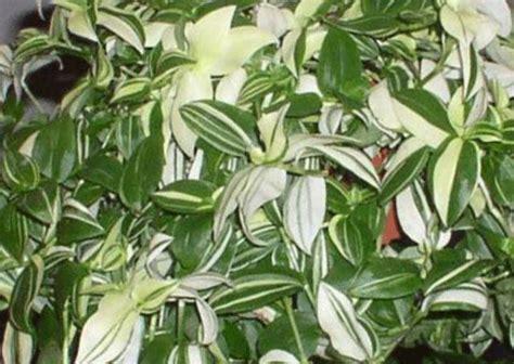 pin  plant id