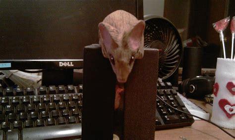 peeking mouse  tom bug janos  lumberjockscom