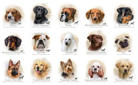 dogs types different types dogs