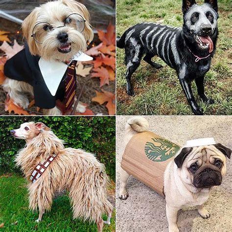 diy halloween costumes  dogs popsugar pets