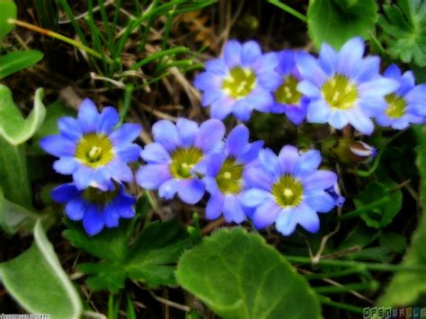 small flower plants small blue flowers wallpaper 16649 open walls