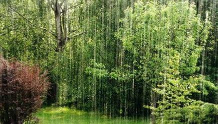 analisi testo la pioggia nel pineto la pioggia nel pineto parafrasi