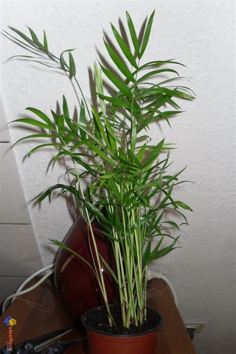 Superbe Petite Plante Verte D Interieur #5: plante-verte-visoflora-41874.jpg