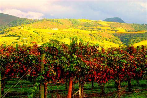 Photo Napa Valley by Travel Trip Journey Napa Valley California Usa