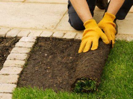 tappeto erboso pronto tappeti erbosi a rotoli o a zolle produzione e vendita