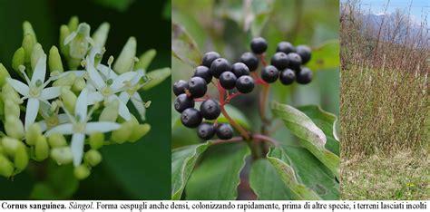 Nomi Di Arbusti E Cespugli by Gli Arbusti