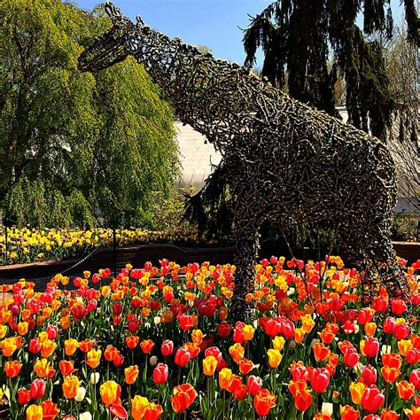 Maryland Botanical Gardens 11 Totally Awesome Places To See Tulips In Maryland Dc And Virginia