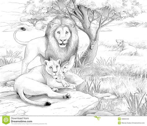 coloring pages animals realistic lion safari lions stock photo image 33835440