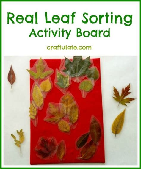 printable leaves for sorting 472 best nature crafts and activities images on pinterest