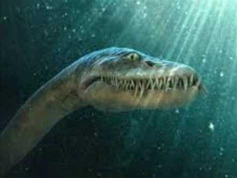fotos animales marinos dinosaurios marinos youtube