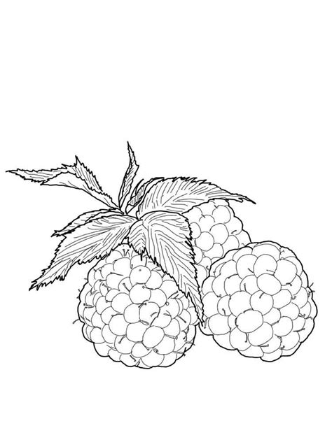 Raspberries coloring pages. Download and print Raspberries