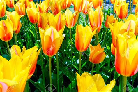 flower garden netherlands netherlands flower garden zandalusnet chsbahrain