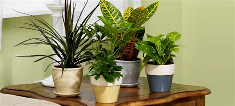 plants at home indoor plants improve air quality 187 exterior designs inc