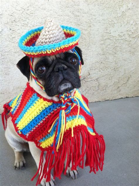 costume for pugs pugs cinco de mayo poncho sombrero for dogs pet clothing clothing pet pug