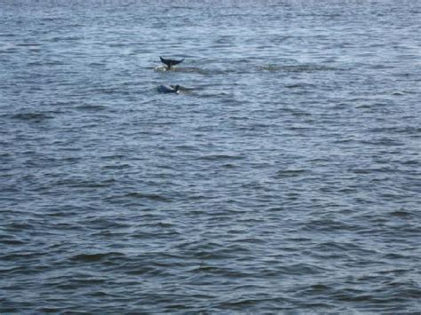glass bottom boat dolphin tours one of our great customers enjoying a day on the water