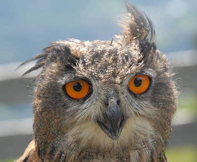 killer owl pocket carnival handmade in melbourne inspiration owls