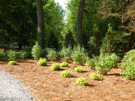 backyard woods 25 outstanding landscaping ideas for shady slopes izvipi com