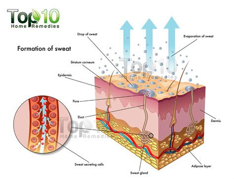 what does diagram home remedies for excessive sweating top 10 home remedies