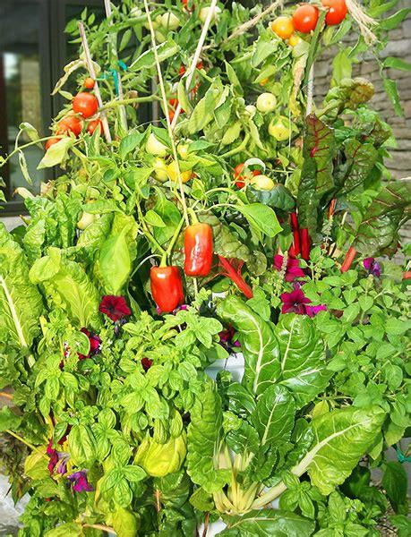 what is vertical gardening 101 grow green food