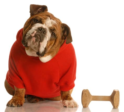 how to communicate with dogs thedogtrainingsecret