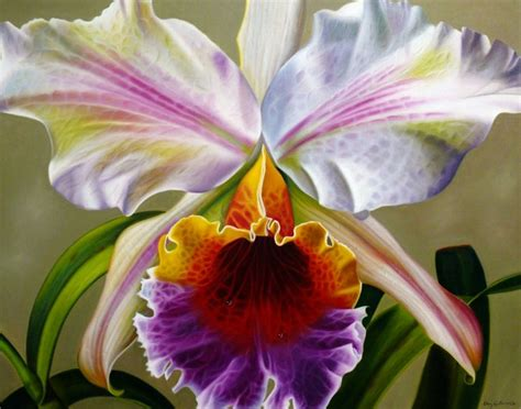 imagenes de rosas orquideas fotos de flores orqu 237 deas flores cultura mix
