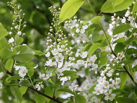Garten Einheimische Pflanzen by Einheimische Pflanzen F 252 R Den Naturnahen Garten