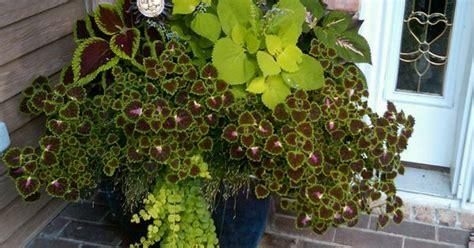 coleus planter gardening and porch decor