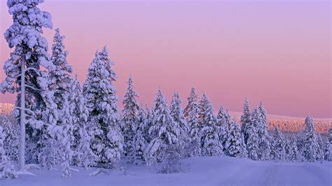 Wonderful Celebrity Christmas Trees #2: Winter_Wallpapers_Snow_Wallpapers-12.jpg