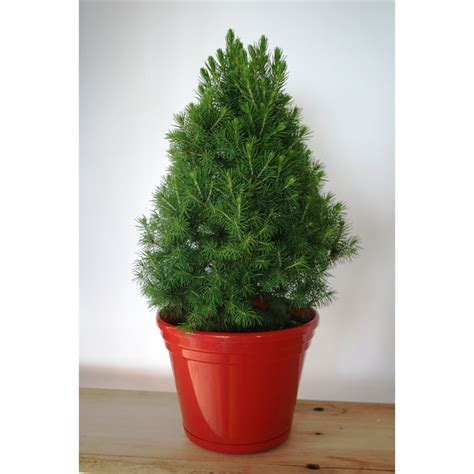 christmas trees from bunnings our range the widest range of tools lighting gardening products