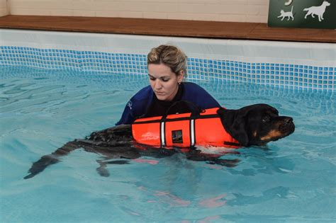 hydrotherapy for dogs peterborough hydrotherapy canine swimming