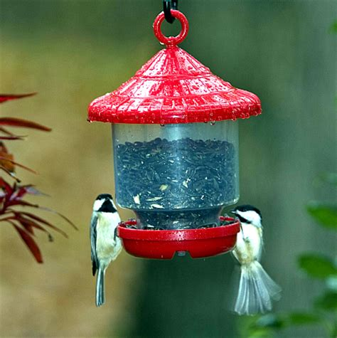 globe bird feeders for small songbirds globe bird feeders