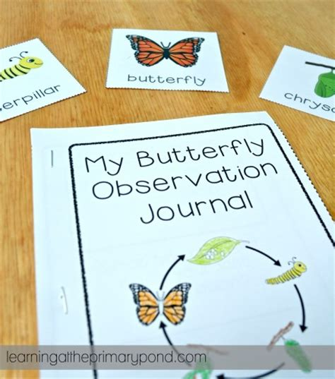 printable caterpillar observation journal ideas for a life cycles unit learning at the primary pond