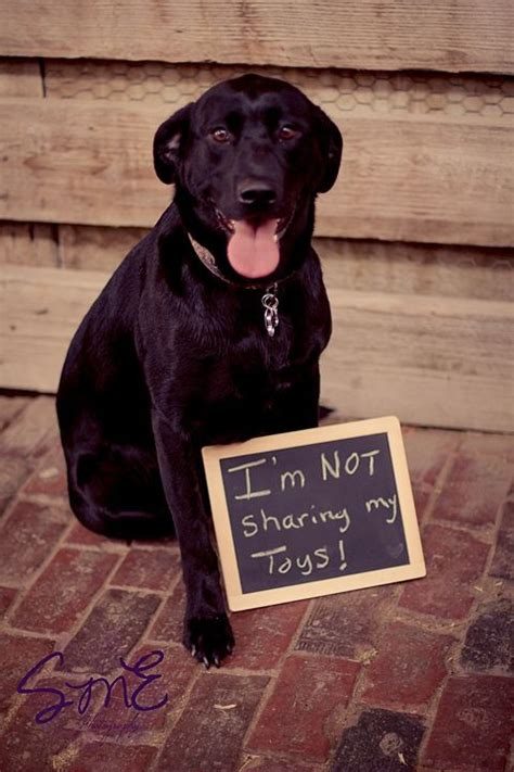 baby announcements with dogs best 25 baby announcements ideas on pregnancy announcement baby