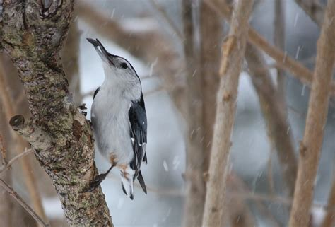 winter bird feeding tips how to plumbing and home repair