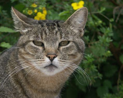 imagenes geniales de gatos historia de la asociaci 243 n del hombre con el gato taringa
