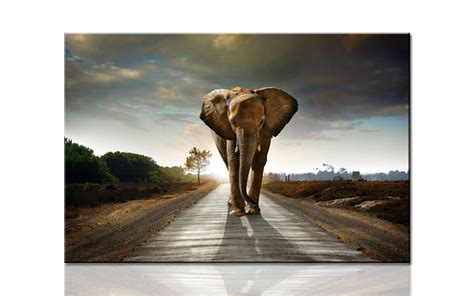 large artwork w717 huge elephant coming large hd canvas print painting